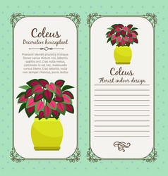 vintage label with coleus plant vector image