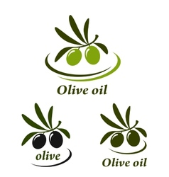colorful olive set vector image