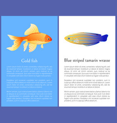 gold fish and blue striped tamarin wrasse icons vector image