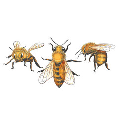honeybee vintage set vector image
