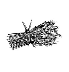 Painted sheaf of hay and spikelets vector
