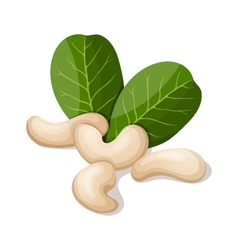 Cashews with leafs isolated on white vector image
