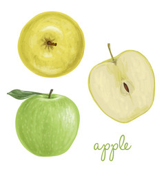 hand drawn apple vector image vector image