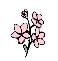 hand drawn flower isolated on white vector image