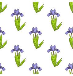 Seamless pattern with dwarf lake iris vector