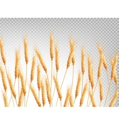Ears of wheat horizontal pattern EPS 10 vector image