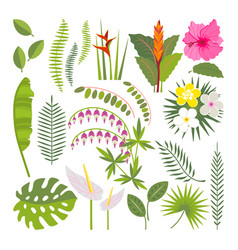 Set of tropical flowers and leaves vector