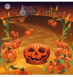 Pumpkins in the field vector