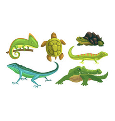 Amphibian animals species collection turtle vector