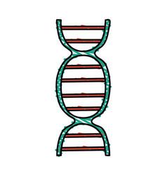 color crayon stripe dna molecule vector image