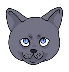 Cute cartoon british shorthair kitten face vector