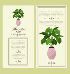 Greeting card with alocasia planton vector