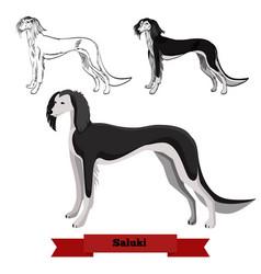 whippet dog isolated on white background vector image