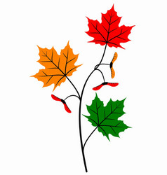 Autumn maple branch vector