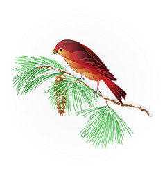 Bird crossbill on a snowy pine branch vector