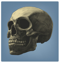 Human skull in engraving style vector