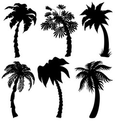 set of tropical palm silhouettes vector image
