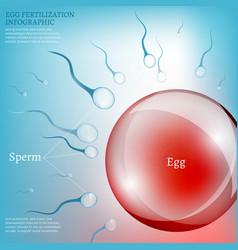 Egg fertilization vector