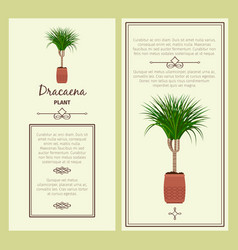 Greeting card with dracaena plant vector