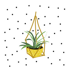 hanging pot plant vector image