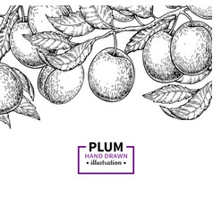 Plum branch vintage border hand drawn isolate vector