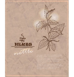 Vintage background with nettles on old paper vector image