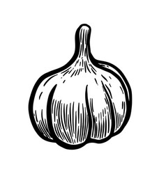 hand drawn garlic design elements for poster vector image