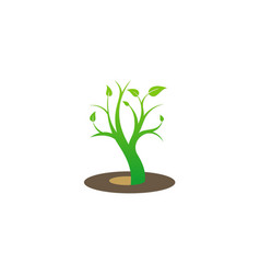 plant green tree ecology logo vector image