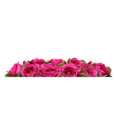 roses flowers festive border congratulation vector image