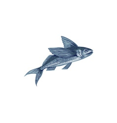 Flying vector images over 150 000 for Flying fish drawing