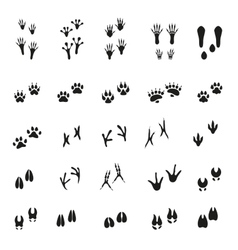 Animal - birds and mammals - footprints vector