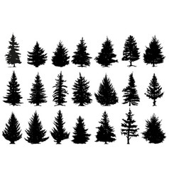 christmas pine trees silhouettes coniferous vector image