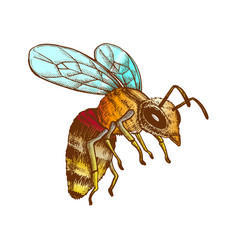 Color flying honey bee insect gathering nectar vector