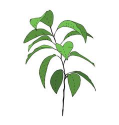 Hand drawn green tangerine tree vector