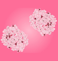 sakura two bouquets of pink cherry blossoms on a vector image