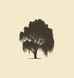 willow or birch hand drawn silhouette vector image