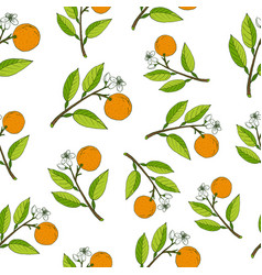 fresh citrus seamless pattern vector image vector image