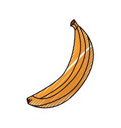 banana delicious fruit vector image