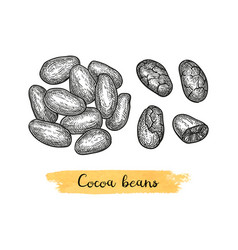 Cocoa ink sketch vector