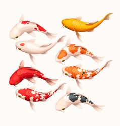 Set high detailed koi fish vector