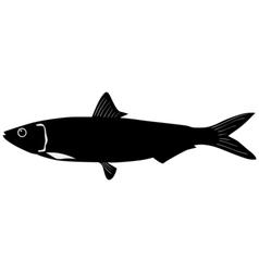 Silhouette of sardine vector