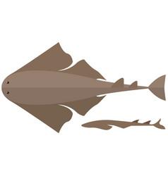 Angel shark on white vector
