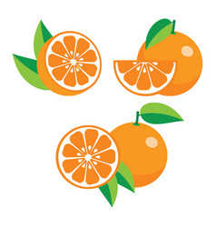 Collection of different oranges vector