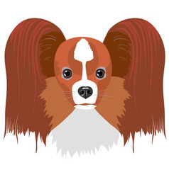 Papillon dog isolated on white background vector