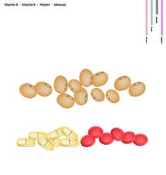 Soybean with vitamin b k protein and minerals vector