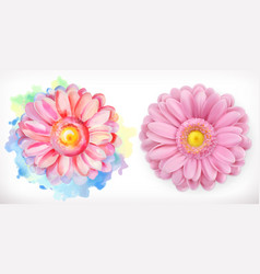 spring pink flowers daisy watercolor and 3d vector image