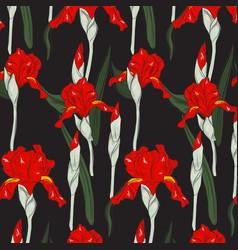 summer red iris blossom hand drawn print modern vector image