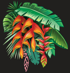 Tropical plants and heliconia flowers vector