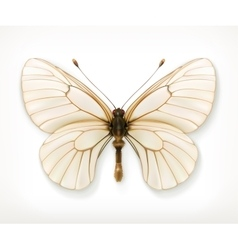 White butterfly icon vector image vector image
