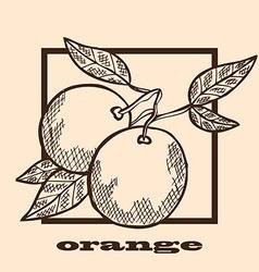 hand drawn oranges vector image